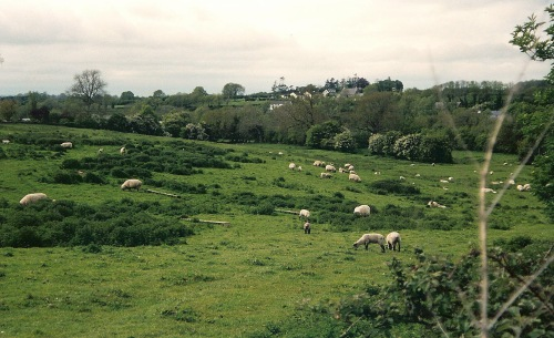 Irish pastoral scene, Irish countryside