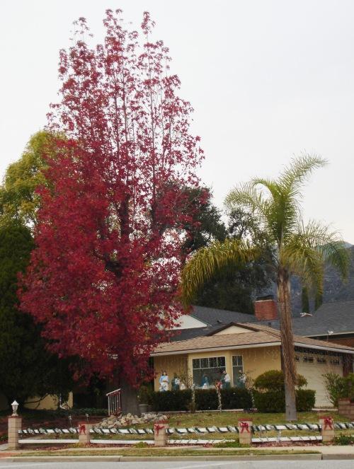 hr trees 2